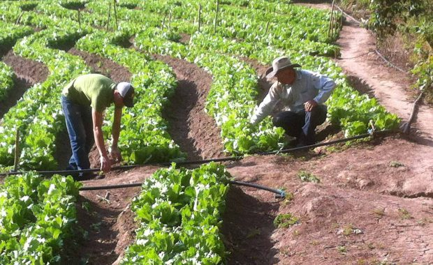 Micro-Irrigation: Ending Poverty with Water Control and Market Access By Urs Heierli and Elisabeth Katz