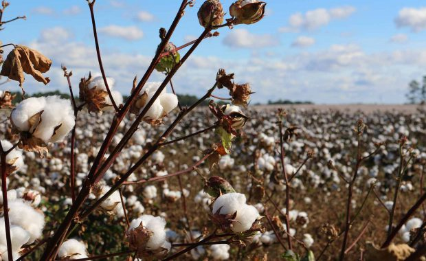 Globalisation with a human face: the organic cotton value chain by Urs Heierli