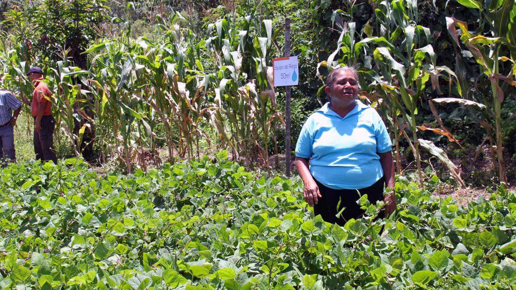 Characterizing Poor Smallholder Farmers in Nicaragua  By Nathalie Hallensleben